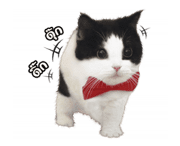They Call Me Meaow (Duk Dik) sticker #13871534