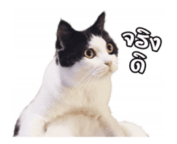 They Call Me Meaow (Duk Dik) sticker #13871536