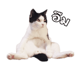 They Call Me Meaow (Duk Dik) sticker #13871539