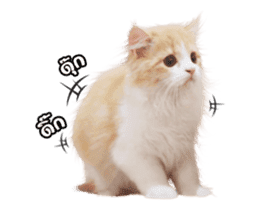 They Call Me Meaow (Duk Dik) sticker #13871540