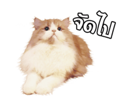 They Call Me Meaow (Duk Dik) sticker #13871541