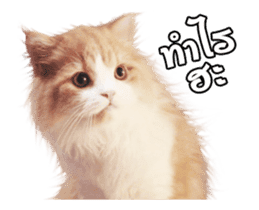 They Call Me Meaow (Duk Dik) sticker #13871542