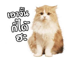 They Call Me Meaow (Duk Dik) sticker #13871544