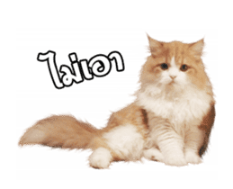 They Call Me Meaow (Duk Dik) sticker #13871545