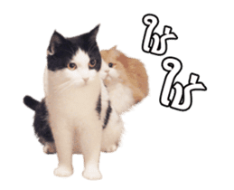They Call Me Meaow (Duk Dik) sticker #13871546