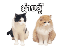 They Call Me Meaow (Duk Dik) sticker #13871547