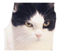 They Call Me Meaow (Duk Dik) sticker #13871548