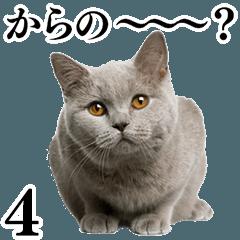 Cat Photo Stickers 04