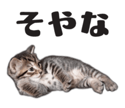 Brown tabby cat and kitten sticker #13909598
