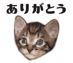 Brown tabby cat and kitten sticker #13909601