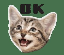 Brown tabby cat and kitten sticker #13909602