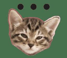 Brown tabby cat and kitten sticker #13909603