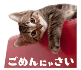 Brown tabby cat and kitten sticker #13909604