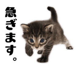 Brown tabby cat and kitten sticker #13909606