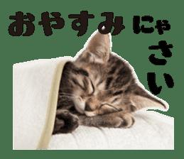 Brown tabby cat and kitten sticker #13909607