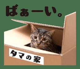 Brown tabby cat and kitten sticker #13909608