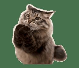 Brown tabby cat and kitten sticker #13909609
