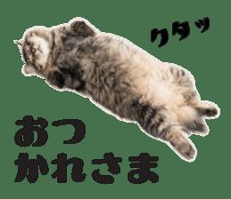 Brown tabby cat and kitten sticker #13909610