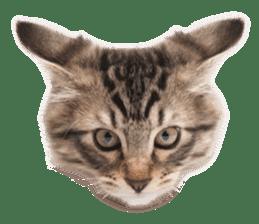 Brown tabby cat and kitten sticker #13909611