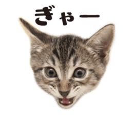 Brown tabby cat and kitten sticker #13909614