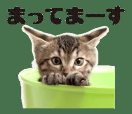 Brown tabby cat and kitten sticker #13909615