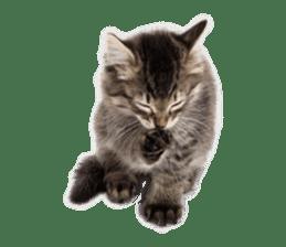 Brown tabby cat and kitten sticker #13909616
