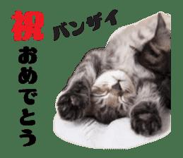 Brown tabby cat and kitten sticker #13909620