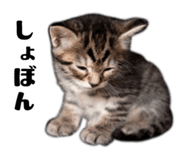 Brown tabby cat and kitten sticker #13909622