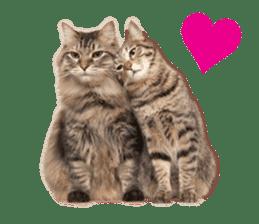 Brown tabby cat and kitten sticker #13909623