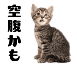 Brown tabby cat and kitten sticker #13909624