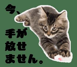Brown tabby cat and kitten sticker #13909625