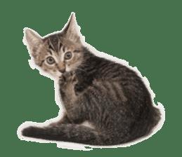 Brown tabby cat and kitten sticker #13909632