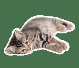 Brown tabby cat and kitten sticker #13909633