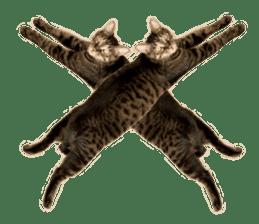 Brown tabby cat and kitten sticker #13909635
