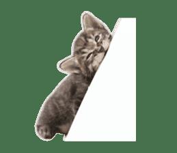 Brown tabby cat and kitten sticker #13909636