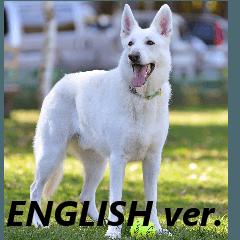 The White Shepherd Dog! ENGLISH ver.(P)1