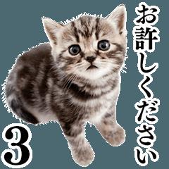 Cat Photo Stickers 03