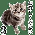 猫写真スタンプ3 - クリエイターズスタンプ