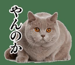 Cat Photo Stickers 03 sticker #13949742