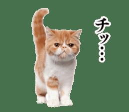 Cat Photo Stickers 03 sticker #13949743