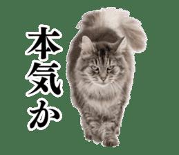 Cat Photo Stickers 03 sticker #13949744