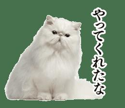 Cat Photo Stickers 03 sticker #13949745