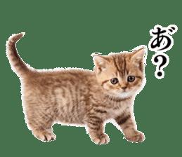 Cat Photo Stickers 03 sticker #13949748
