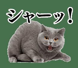 Cat Photo Stickers 03 sticker #13949749
