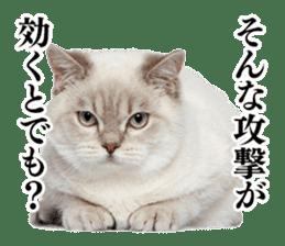 Cat Photo Stickers 03 sticker #13949750