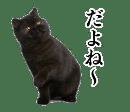 Cat Photo Stickers 03 sticker #13949753