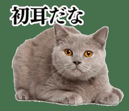 Cat Photo Stickers 03 sticker #13949754