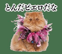 Cat Photo Stickers 03 sticker #13949756