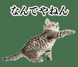 Cat Photo Stickers 03 sticker #13949759