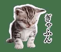 Cat Photo Stickers 03 sticker #13949760